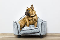 bulldog on a small sofa