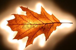 Mystisch inszenierte Blätter