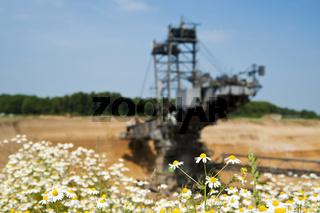 Blumenwiese am Tagebau