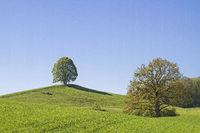 Deciduous tree on Veiglberg