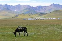 Mule and Yurt Camp at Song Kol Lake, Central Kyryzstan