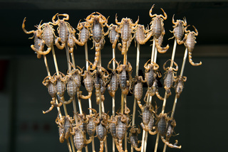 Grill and fried scorpions on stick