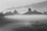 Landscape in morning Fog black and white