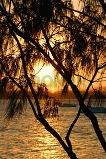 Casuarina Against The Sun 2