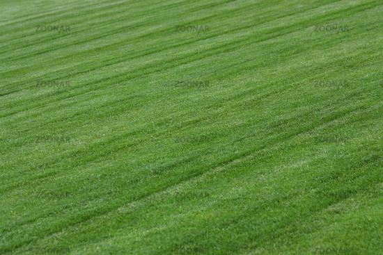Fußballrasen Spielfeld frisch gemäht