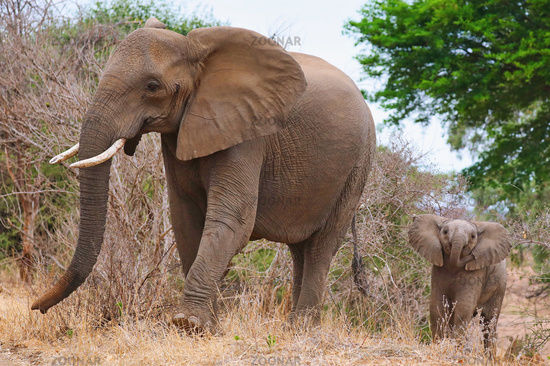 elephant and a baby, south africa