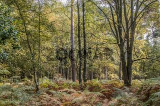 Im Darsser Wald (Halbinsel Fischland-Darss-Zingst, Nationalpark Vorpommersche Boddenlandschaft)