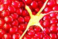 Pomegranate fruit close up macro