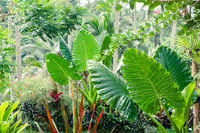 Tropical plants and flowers in fantasy rainfores