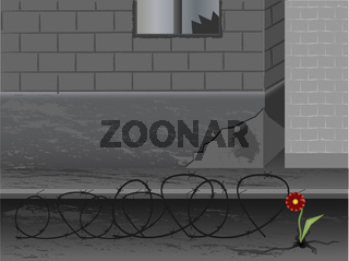 Town, war and flower