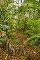 Jungle trail, Costa Rica