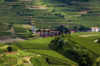 das Weindorf Oberbergen im Kaiserstuhl