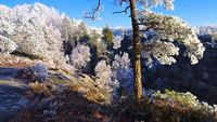 Elbsandsteingebirge im Winter  - Elbe sandstone mountains in winter and hoarfrost