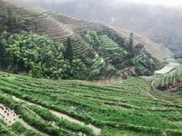 above view of paddy on terraced gardens in rain