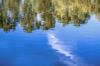 Abstract trees reflection on calm water surface, scenic forest view with a lot of spce for text