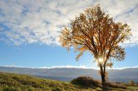 The Sun Shining Through a Tree in the Fall
