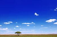 landscape at Etosha pan, Namibia