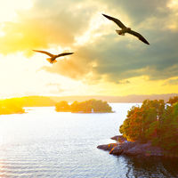 Sunset landscape with flying seagulls