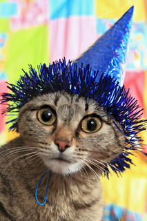 Ridiculous cat in a celebratory cap. A panic and bewilderment
