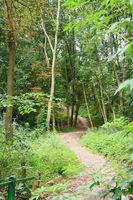 Waldwanderweg
