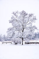 Winter landscape with a frosted tree