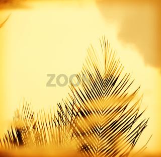 Sunset Palm Fronds