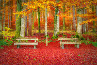 Benches on a carpet of autumn leaves