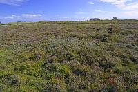 Dünenlandschaft am Morsum - -Kliff, Morsum,  Sylt, nordfriesisch