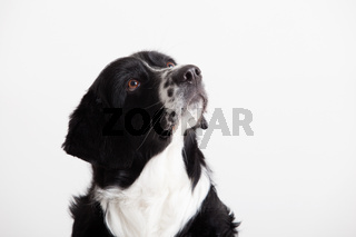 Sweet dog portrait