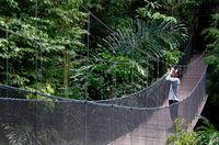 Bird watcher on a wooden bridge in the jungle.