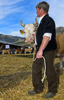 resentation of Simmental cattle at the SWISSCOW Topschau Saanenland, Gstaad, Switzerland