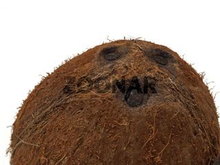 eine Kokosnuss / a coconut