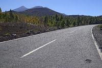 Strasse durch den Nationalpark, Kanarische Kiefern (Pinus canari