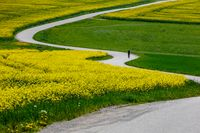 Beautiful rape field spring rural landscape