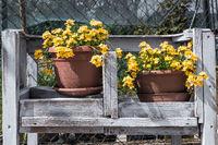 Wildflowers yellow outdoor