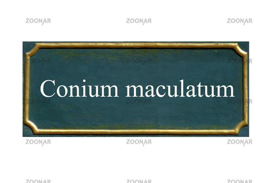shield Conium maculatum