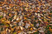 Herbstblätter auf Wiese