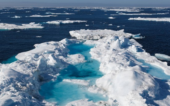an essay on arctic ecology View this term paper on human ecology climate change in arctic the arctic is located on the middle of the north pole the arctic ocean the northern parts of.