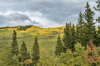 fall colors at Kenosha Pass in Colorado