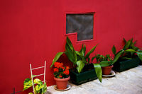 red wall and flowerpots