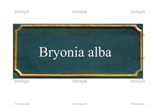 shield Bryonia alba