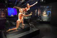 Blick in die Ausstellungsräume des Menschen Museum, Berlin, Deut