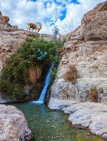 Waterfall and rapid creek