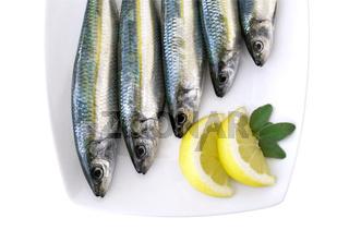 Sardinen Teller -  sardina pilchardus