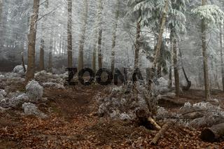 Winter In The Woodland Sullen Woods Berkshire UK