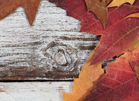 Seasonal Autumn foliage on rustic white wooden boards