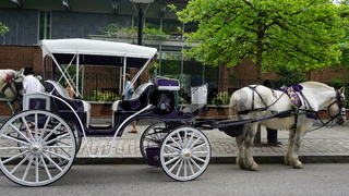 Horse and carriage rides in Philadelphia, USA