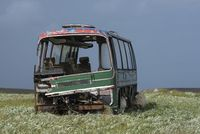 Scrap bus on a meadow with sheep, Isle of Lewis