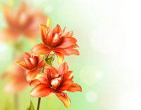 Floral Border with red lily