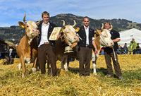winning Simmental cows, SWISSCOW Topschau Saanenland, Gstaad, Switzerland